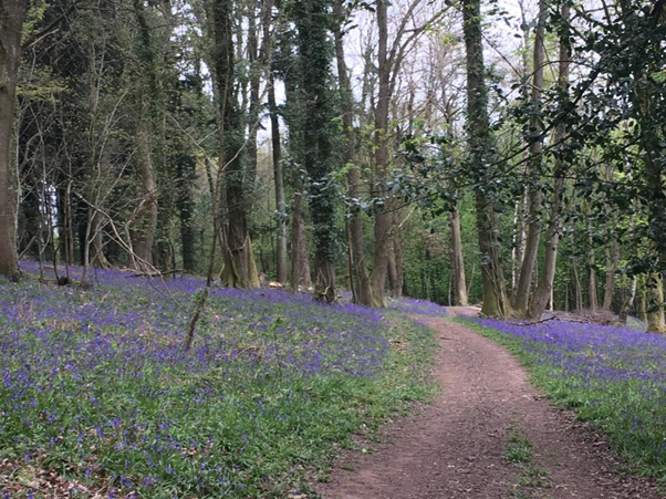 Self Care, bluebells, forest, selfcare